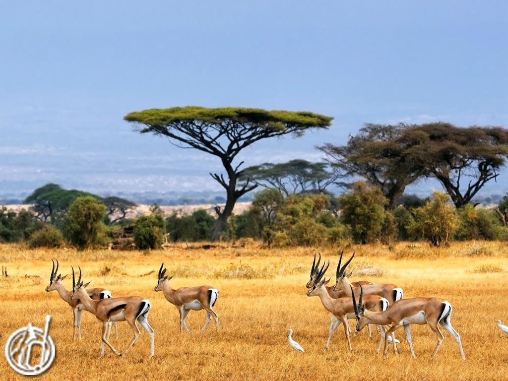 Safari Tour at Baluran National Park odifatour.com