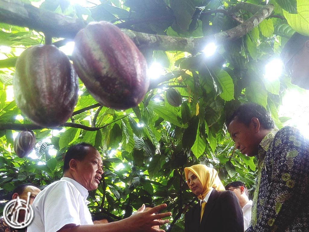 Coffee-And-Cocoa-Science-Techno-Park-East-Java-Attractions-odifatour.com