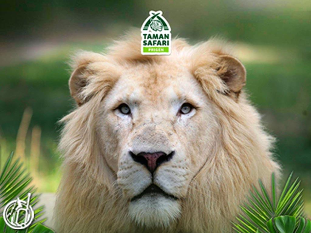 Honeymoon Destinations Safari Adventure at Safari Park Prigen - odifatour.com